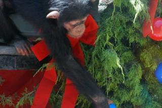 állatok karácsonya (állati karácsony)
