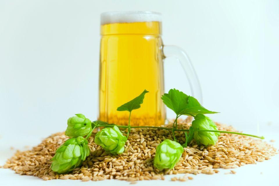sör (sör, árpa, komló, )