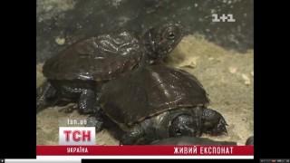 Kisteknősök (kisteknősök,)