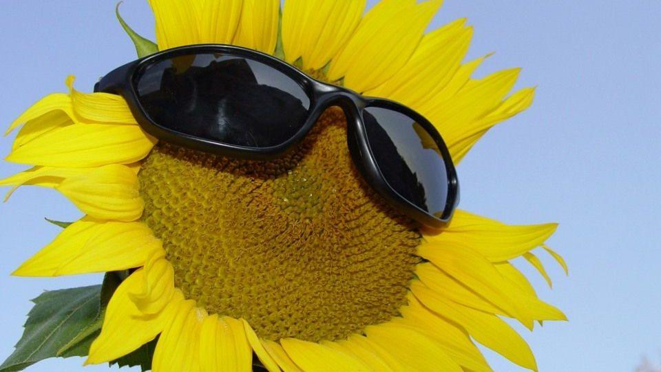 napszemüveg (napsütés, )