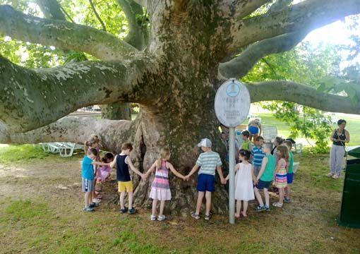Az év fája 2012 (Az év fája)