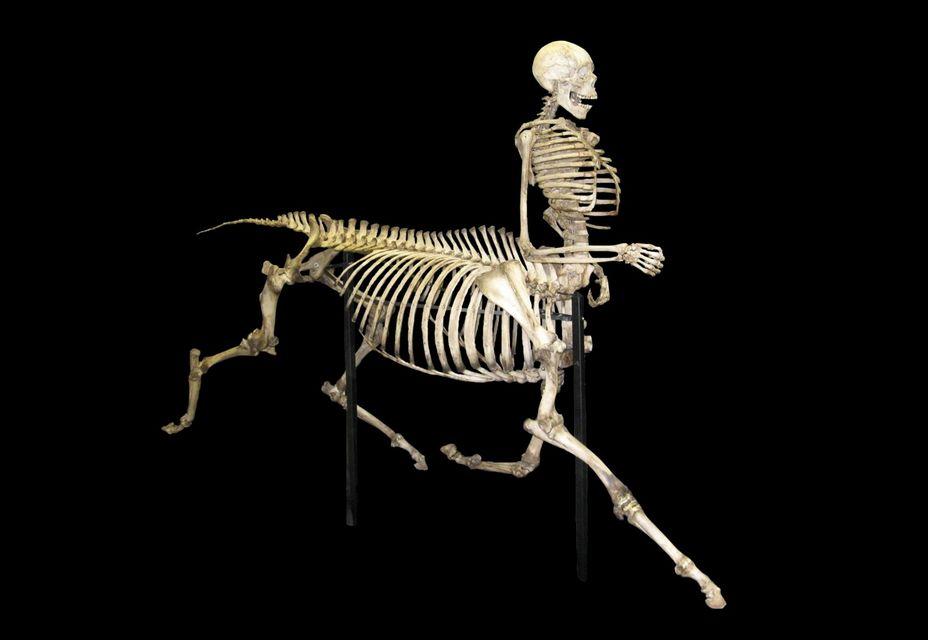 Kentaur (kentaur)