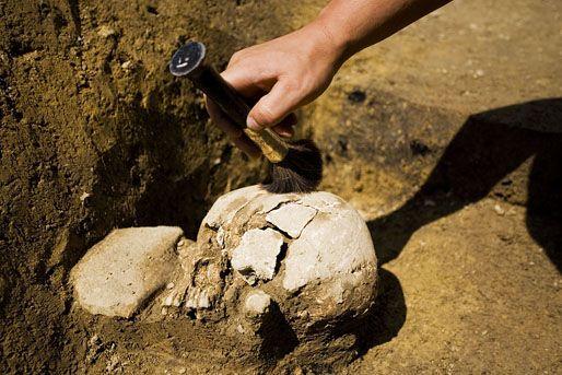 ásatás (ásatás, régészet, feltárás, koponya, )
