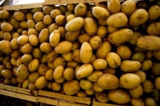 burgonya (krumpli, )
