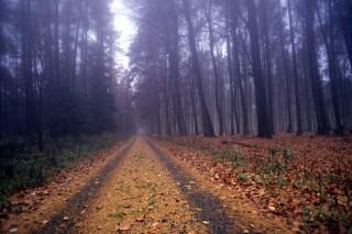 erdő (ősz, )
