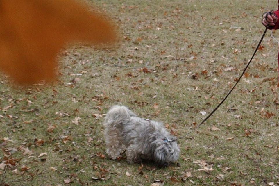 kutyasétáltatás (kutyasétáltatás, )