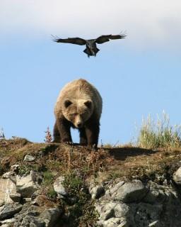 medve(210x140)(1).jpg (medve, )