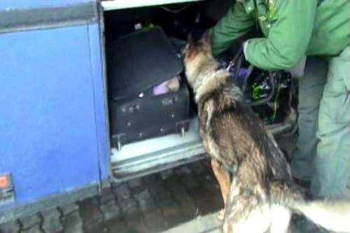 Kábítószer kereső kutya (Kábítószer kereső kutya)