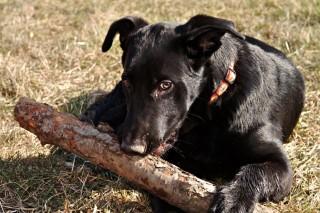 fekete kutya (fekete kutya, )