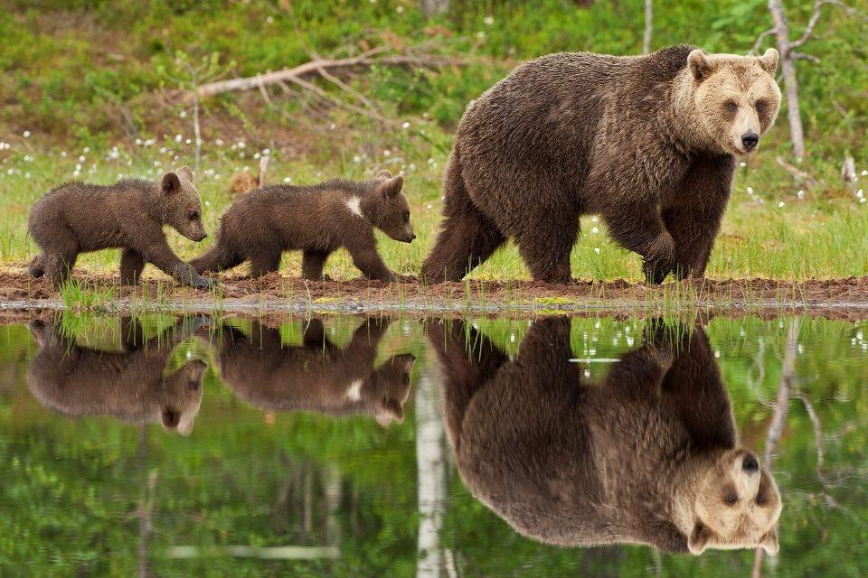 medve-bocsokkal (barnamedve bocsokkal)