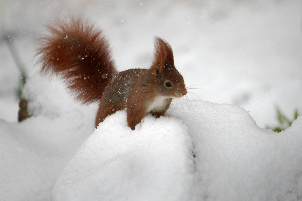 mókus a hóban (havazás)