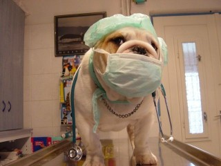 Állatorvosi rendelő (Állatorvosi rendelő)