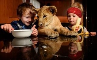 Egy kisfiú és az oroszlánja (oroszlán, cirkusz)
