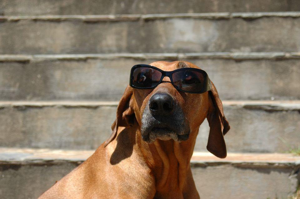 Kánikula, kutya meleg (kánikula, )