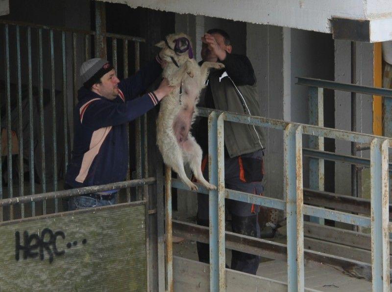 Kutyák mentése az árvízből Szegeden (Kutyák mentése az árvízből Szegeden)