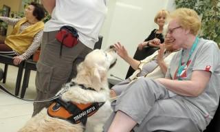 Terápiás kutyák egy szegedi idősek otthonában (Terápiás kutyák egy szegedi idősek otthonában)