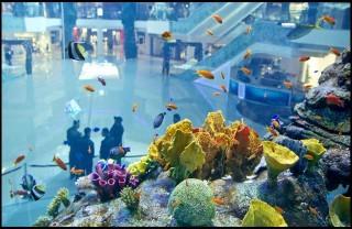 akvárium (akvárium)