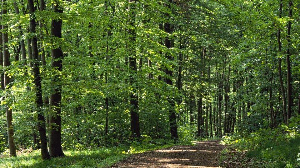 erdo(210x140)(2).jpg (erdő, fák, erdei út)