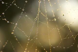 pókháló (pókháló, )