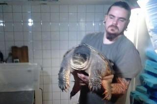teknős (teknős)