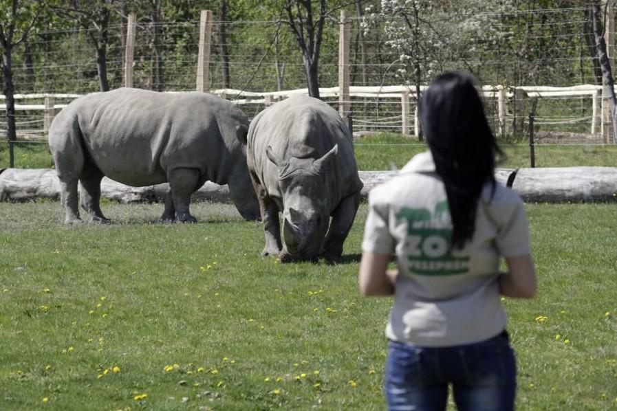 veszprémi állatkert (veszprémi állatkert, )