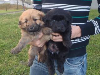 Örökbe fogadott kutyusok (Örökbe fogadott kutyusok)