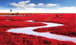 Vörös part, Kína, Panjin (Vörös part, Kína, Panjin)