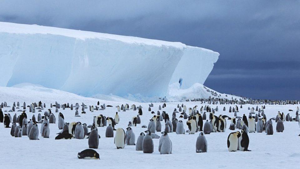 antarktisz(210x140)(1).jpg (pingvin, )