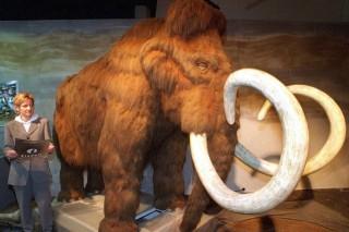 mamut (mamut, )