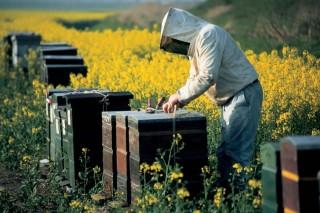 méhkaptár (méhkaptár, méhtámadás, )