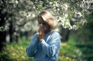 pollen (pollen)
