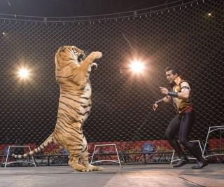 cirkusz (cirkusz, )