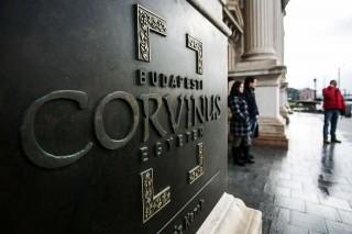 corvinus (corvinus, )