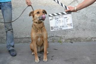 kutya (kutya, meleg, kánikula, víz, )