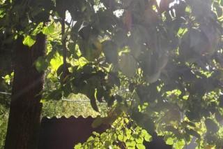 napsutes(1)(960x640).jpg (hőség, kánikula, )