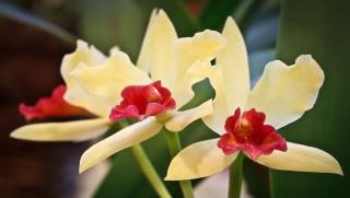 virág (virág, füvészkert, )