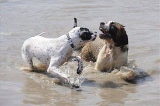 Kutyák strandja Szegeden (Kutyák strandja Szegeden)