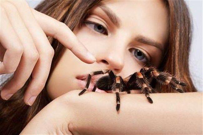 Lany-pokkal(650x433).jpg (lány, pók, madárpók, )