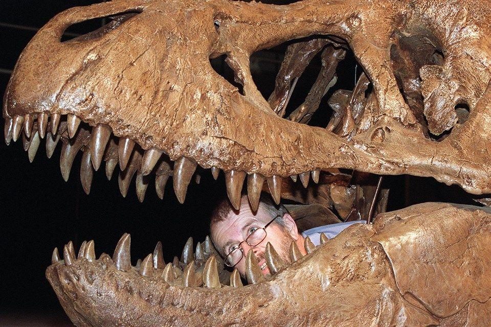 T(960x640).jpg (t. rex, t-rex, tyrannosaurus rex, )