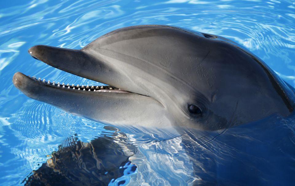 delfin (delfin, )