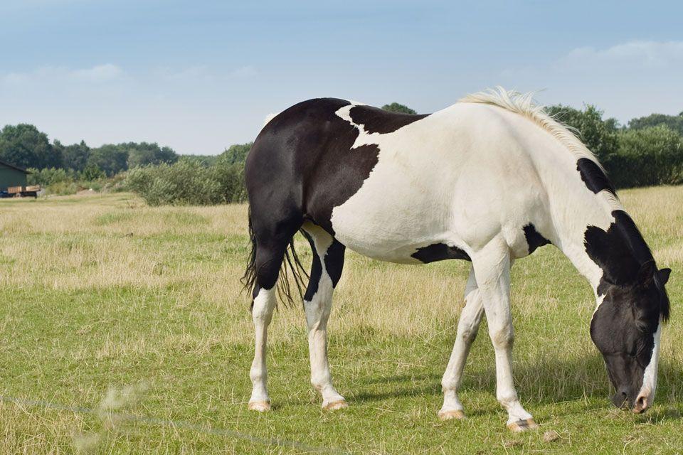 ló (ló)