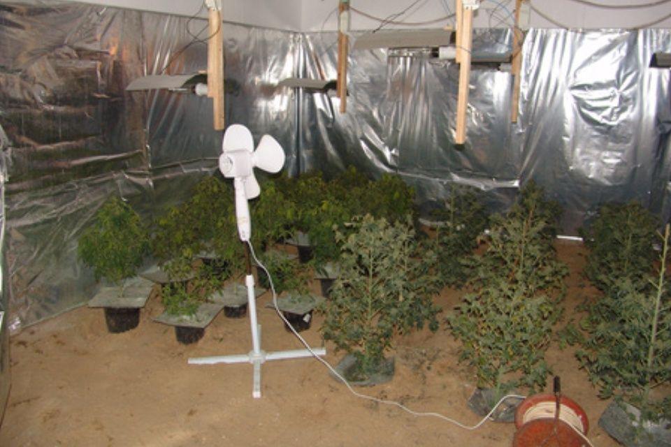 marihuana(960x640)(5).jpg (marihuána, fű)