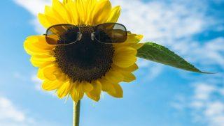napsutes(430x286)(1).jpg (napsütés, tavasz, nyár, )