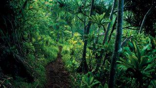 őserdő, dzsungel, esőerdő (őserdő, )