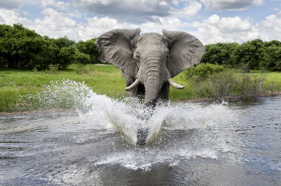 Elefant(960x640)(2).jpg (elefánt)