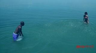 Fekete Pákó vízben (fekete pákó, víz, balaton, )