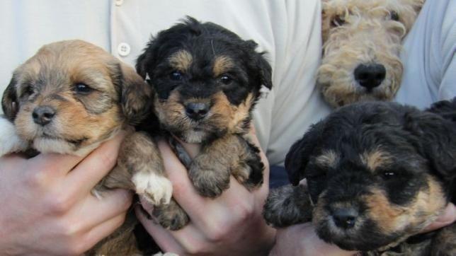 Kidobott kutyák (kidobott kutyák)