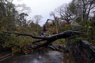 Kidőlt fa (kidőlt fa, new york, )