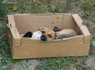 Kutyák dobozban (Kutyák dobozban)