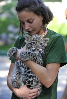 leopárdkölyök (leopárd, )